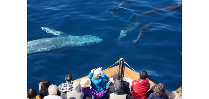 Whale Watching on H&M Landing Trips