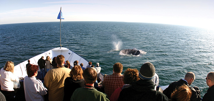 Hornblower Cruises and Events San Diego Whale Watching Coupon