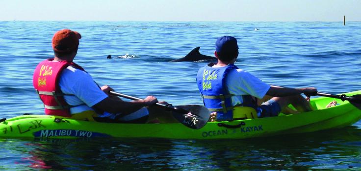 Kayak w-dolphin