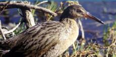 Shorebird Aviary