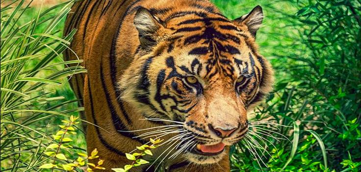 san-diego-zoo-safari-park