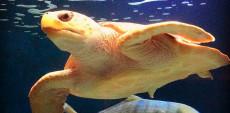 Birch_ Aquarium_Turtle