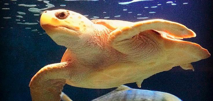 Birch_ Turtle