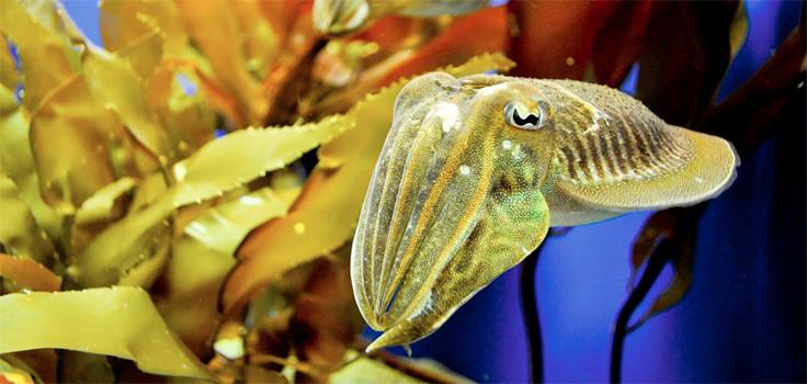 Birch Aquarium 3