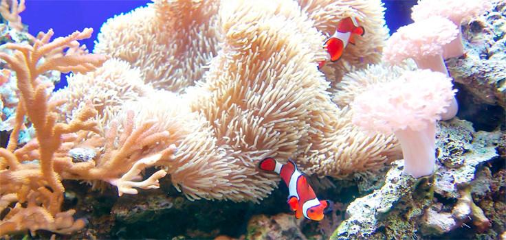Birch Aquarium Fish Tank