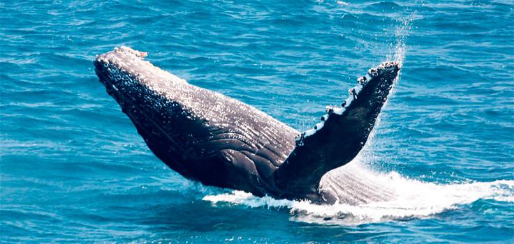 Birch Aquarium Whale Watching