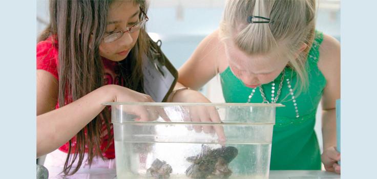 Kids-Looking-at-Fish