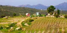 Poppaea Sabina Winery Tours
