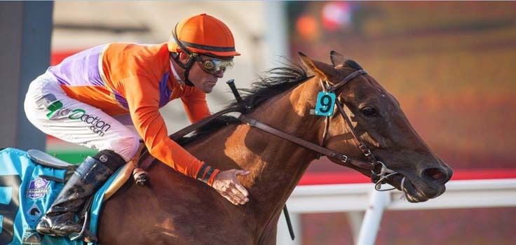 Del Mar Horse Racing Cup Races