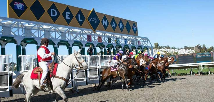 Horse line up gate