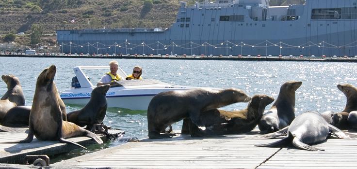 speedboat-seals