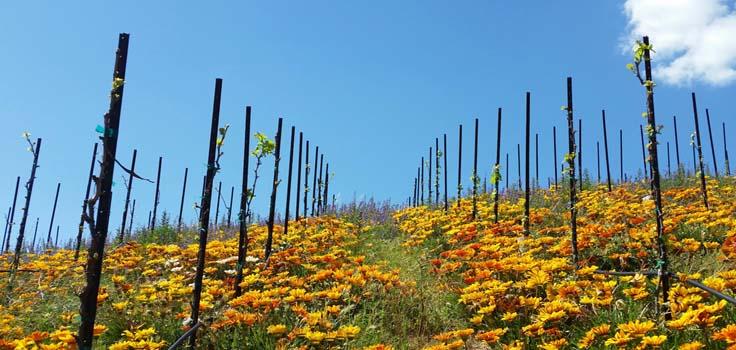 vineyard-flowers_135156-1