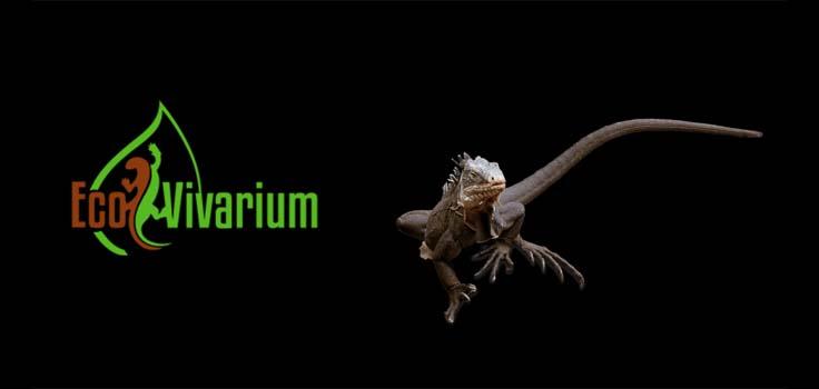 EcoVivarium Living Museum 2