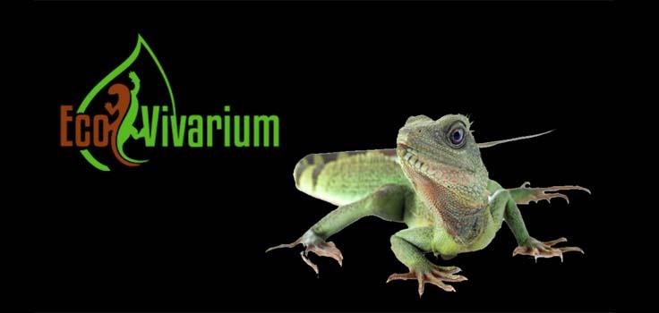 EcoVivarium Living Museum