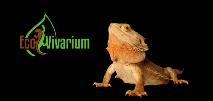 EcoVivarium Living Museum 1