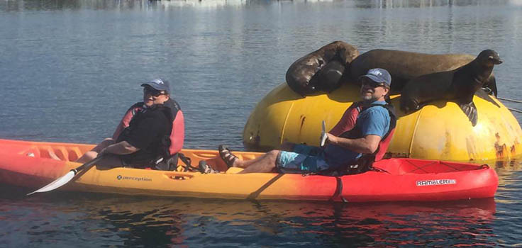 Sea-Lions-and-Kayaks